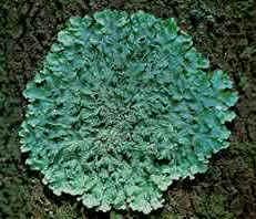 Reino Fungi