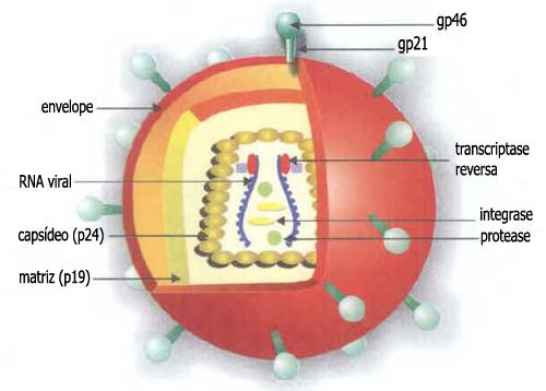 Retrovírus