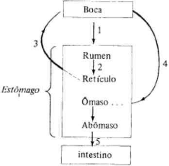Ruminantes