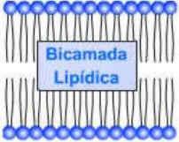 Composição Química das Células