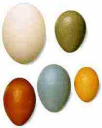Ovos das Aves
