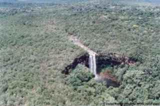 Cerrado e a Floresta Amazônica
