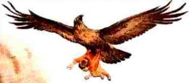 Pés das Aves