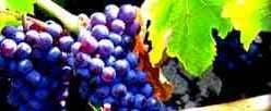 Classificação dos Vinhos