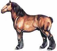 Cavalo Ardenês