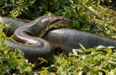 Habitat das Serpentes