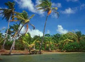 Ilha de Maraj�