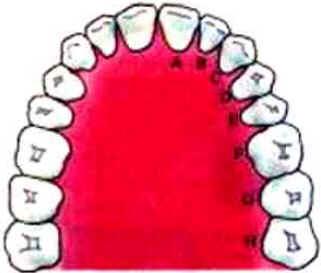 Dentes