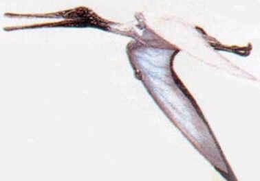 Ctenochasma