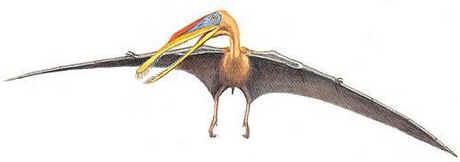 Gnathossauro