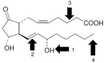 Metabolismo de PG