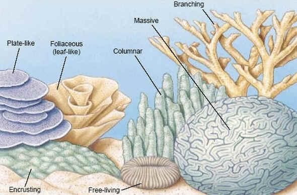 Formas de corais