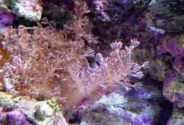 Recifes dos Corais