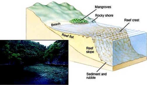 Estrutura dum recife de coral costeiro