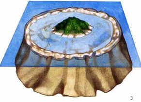 3) O recife torna-se mais compacto