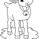 carneiro-1