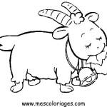 carneiro-31
