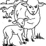 carneiro-34