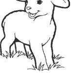 carneiro-4
