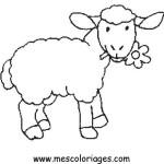 carneiro-9