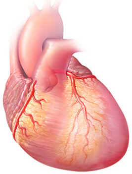 cardiomegalia-02